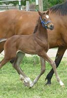 Leda's Der Graf colt at 2 weeks